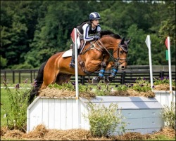 Essex Horse Trials June 2017